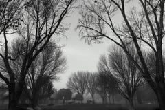 Schwarzweißfotografie auf Niederlassungen Stockfotos
