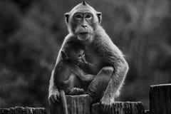 Schwarzweißfotografie des wilden Affen und des Kindes Stockbilder