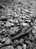 Schwarzweißbilder von den getrockneten Blättern, die auf eine felsige Oberfläche fallen Für den natürlichen Hintergrund stockbild