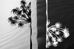 Schwarzweiss Stockbild