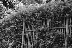 Schwarzweiss-Ansicht der Hecke und des Zauns stockbild