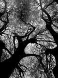 Schwarzweiss-Ansicht von Baumasten stockfotografie
