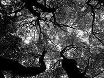 Schwarzweiss-Ansicht von Baumasten Stockbild
