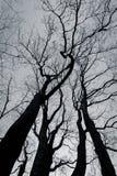Schwarzweiss-Baum Stockbilder