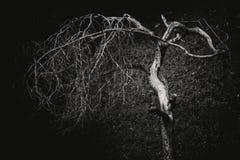 Schwarzweiss-Baum Stockbild
