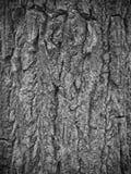 Schwarzweiss-Baumrinde Stockfotos
