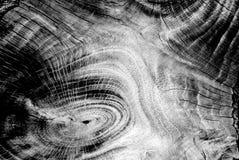 Schwarzweiss-Baumstamm für Hintergrund Stockfoto