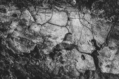 Schwarzweiss-Beschaffenheit des alten Holzes Hölzerne Hintergrund-Tapete Stockfotografie