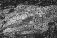 Schwarzweiss-Beschaffenheit des alten Holzes Hölzerne Hintergrund-Tapete Lizenzfreies Stockbild
