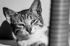 Schwarzweiss-Bild der Katzendarstellung der getigerten Katze, die in Richtung der Sonne blickt lizenzfreie stockfotos