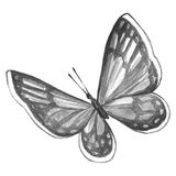 Schwarzweiss-Bild eines Schmetterlinges auf einem weißen Hintergrund Lizenzfreie Stockbilder