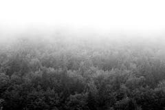 Schwarzweiss-Bild eines Waldes an einem nebeligen Tag, gelegen in der Stadt von Valli del Pasubio, Italien Lizenzfreies Stockfoto
