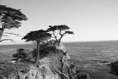 Schwarzweiss-Bild - Zypresse-Bäume entlang einem 17 Meilen-Antrieb Lizenzfreies Stockfoto