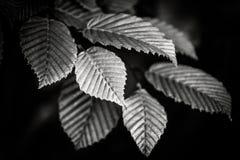 Schwarzweiss-Blätter Lizenzfreies Stockfoto