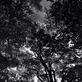 Schwarzweiss-Blätter Stockfoto