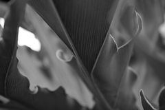 Schwarzweiss-Blätter Stockbilder