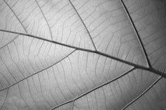 Schwarzweiss-Blattbeschaffenheit für Hintergrund Lizenzfreies Stockfoto