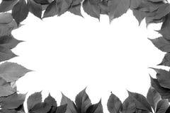 Schwarzweiss-Blattrahmen lokalisiert auf weißem Hintergrund Lizenzfreie Stockfotos