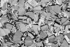 Schwarzweiss-Bleistiftschnitzel auf weißem Hintergrund Stockbilder