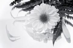 Schwarzweiss-Blume Stockfoto