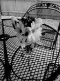 Schwarzweiss-Blumen auf Tabelle Stockfotos