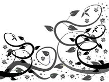 Schwarzweiss-Blumenhintergründe Stockfotografie
