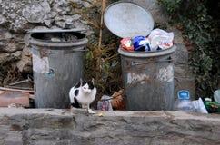 Schwarzweiss--Cat Near Trash Containers Stockfotos