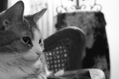 Schwarzweiss--Cat Profile Lizenzfreies Stockfoto