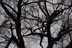 Schwarzweiss-Entwurf von Niederlassungen gegen einen grauen Himmel Lizenzfreie Stockfotografie