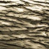 Schwarzweiss-Eukalyptusbarke Lizenzfreie Stockfotografie