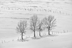 Schwarzweiss-Foto der Winterlandschaft mit Zaun und Baum Stockfotos