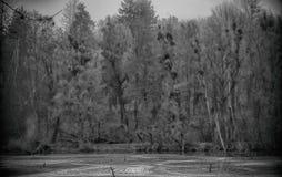 Schwarzweiss-Foto des Parks und des gefrorenen Teichs lizenzfreie stockbilder