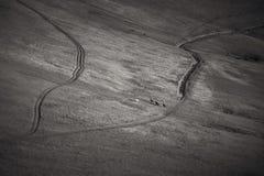 Schwarzweiss-Foto des Weiden lassens von Pferden Lizenzfreie Stockfotos