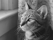 Schwarzweiss-Foto einer Katze Lizenzfreies Stockbild
