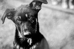Schwarzweiss-Foto eines verlassenen Hundes Lizenzfreie Stockfotos