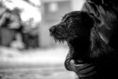 Schwarzweiss-Foto eines verlassenen Hundes Lizenzfreie Stockbilder