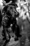 Schwarzweiss-Foto eines verlassenen Hundes Stockfotografie
