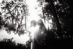 Schwarzweiss-Foto von netten emotionalen Jungvermählten lizenzfreies stockbild