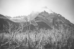 Schwarzweiss-Fotografie des Tales und der Felsen Shevelev Stockfotografie
