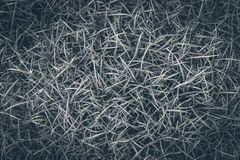 Schwarzweiss-Gras aus den Grund lizenzfreies stockfoto