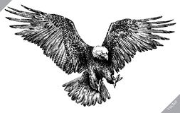 Schwarzweiss gravieren Sie lokalisierte Adlervektorillustration Stockbilder
