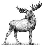 Schwarzweiss gravieren Sie lokalisierte Illustration des Elchhandabgehobenen betrages Stockbild