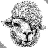 Schwarzweiss gravieren Sie lokalisierte Lamavektorillustration Lizenzfreie Stockfotos