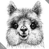 Schwarzweiss gravieren Sie lokalisierte Lamavektorillustration Stockfotos