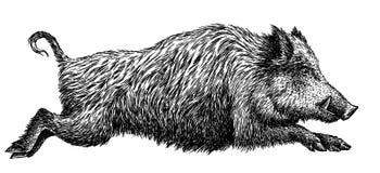 Schwarzweiss gravieren Sie lokalisierte Schweinillustration Lizenzfreies Stockfoto