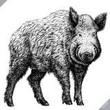 Schwarzweiss gravieren Sie lokalisierte Schweinvektorillustration Stockbilder