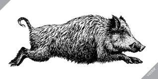 Schwarzweiss gravieren Sie lokalisierte Schweinvektorillustration Lizenzfreies Stockfoto