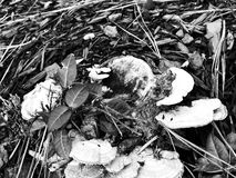 Schwarzweiss-Herbst lizenzfreie stockbilder