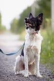 Schwarzweiss-Hund sitzt Stockfotos