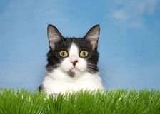 Schwarzweiss-Kätzchen im Gras Stockbilder